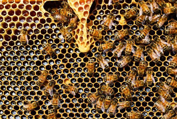 Bess in a hive